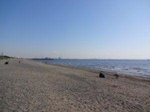 3月の稲毛海浜公園の風景 その2