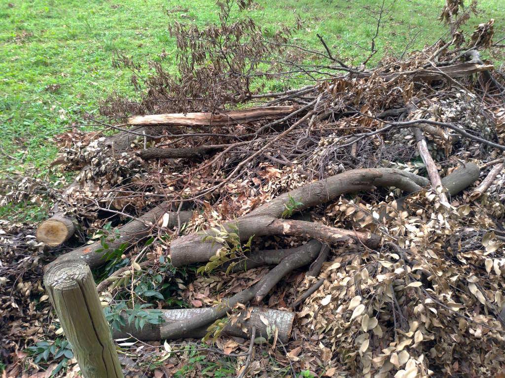 枯れた木の枝が積み上がっていた