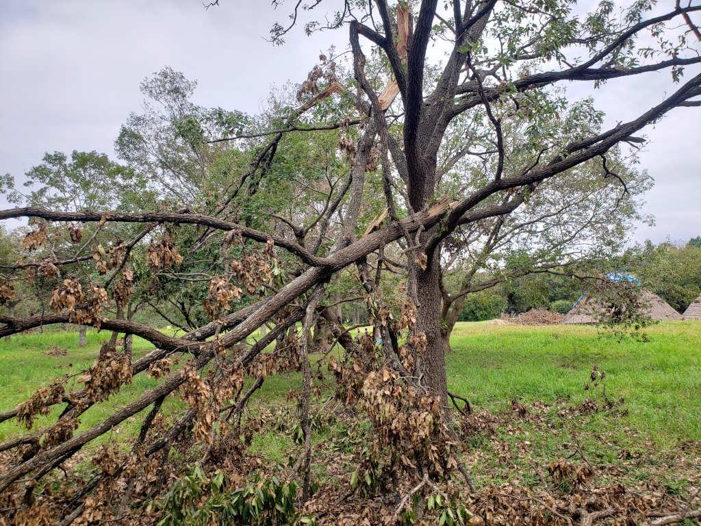 まだ片付けられていない木々